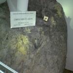 muzeum_ogien