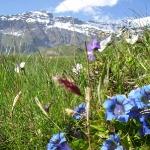 alpejska-laka